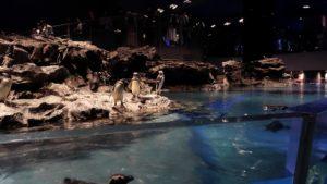 猛スピードで泳いだりしていたペンギンたち