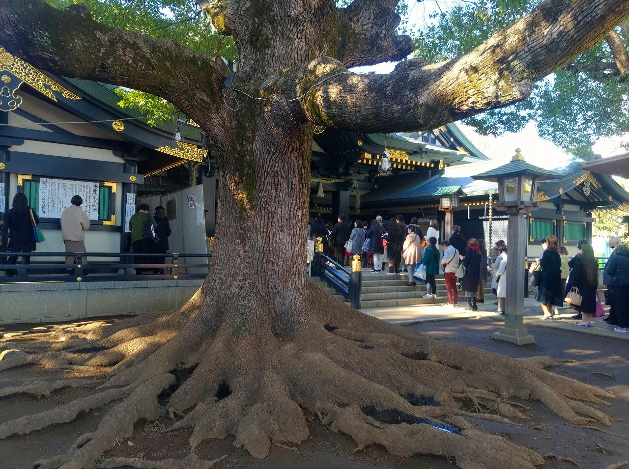 隆々と根を張る神木